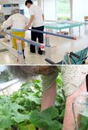 歩行訓練と野菜収穫の様子
